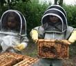 copii apicultori