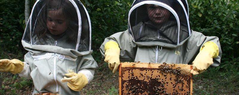 Cele mai frecvente sapte întrebări ale apicultorului începător