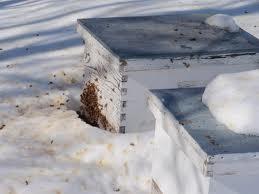 albine cu diaree