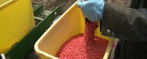 Neonicotinoidele – pentru fermieri mumă, pentru apicultori ciumă