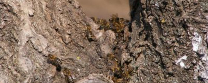 Mierea de mana – pentru oameni muma, pentru albine ciuma
