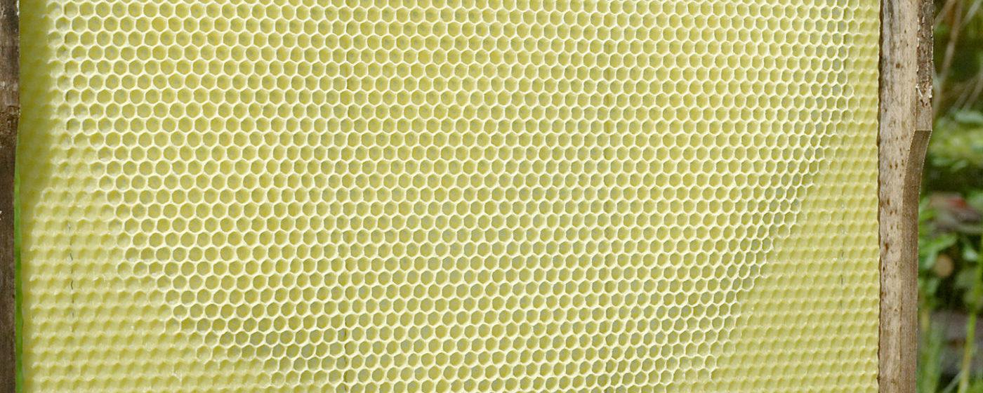Ramele pentru stupi, cum au apărut și au revolutionat apicultura