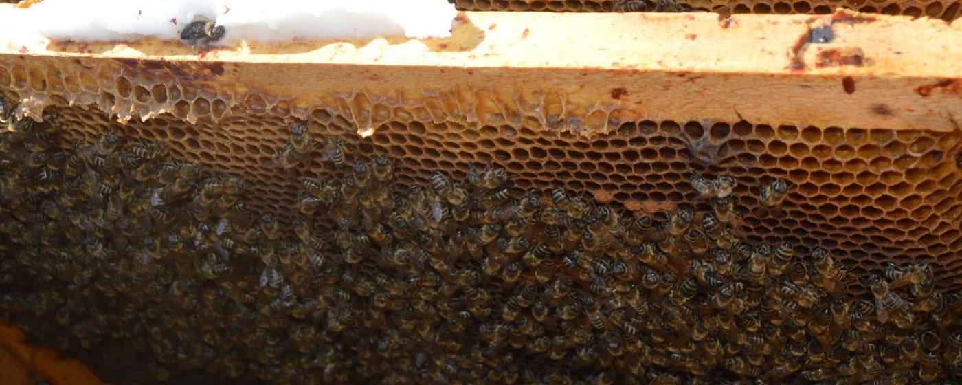 Lucrări de primăvara în stupina – restrangerea cuibului de albine