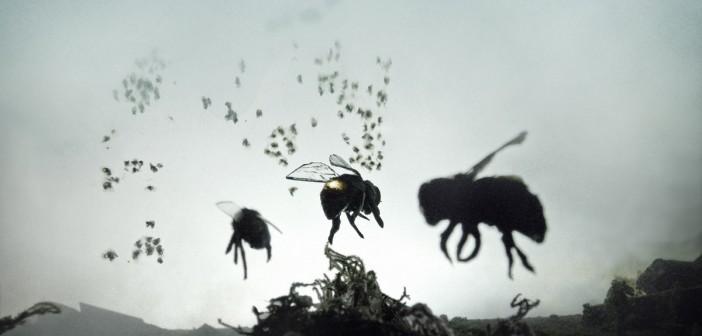 Zumzetul cel din urma al albinelor.  Motivul pentru care albinele ȋşi trăiesc ultimii ani din existenţa lor pe acest pământ